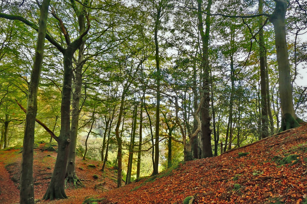 Wooded Dell