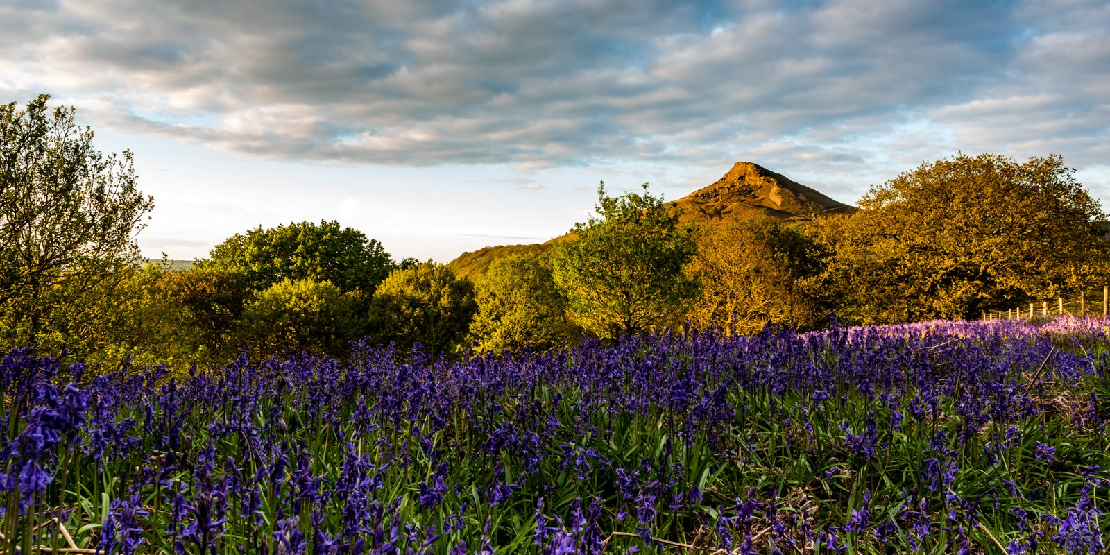 4th 262 votes - Bluebells by Roseberry Topping